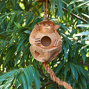 monkey coconut birdhouse